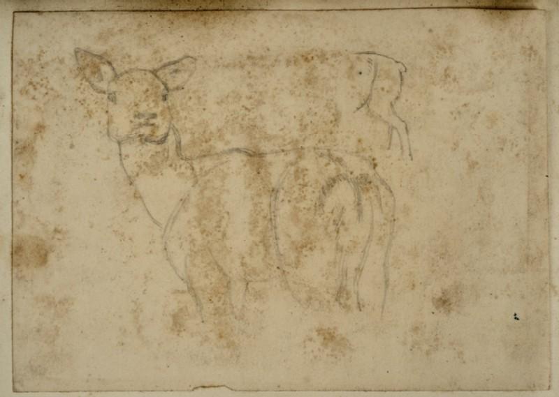 Study of a Deer (WA2007.7.81)