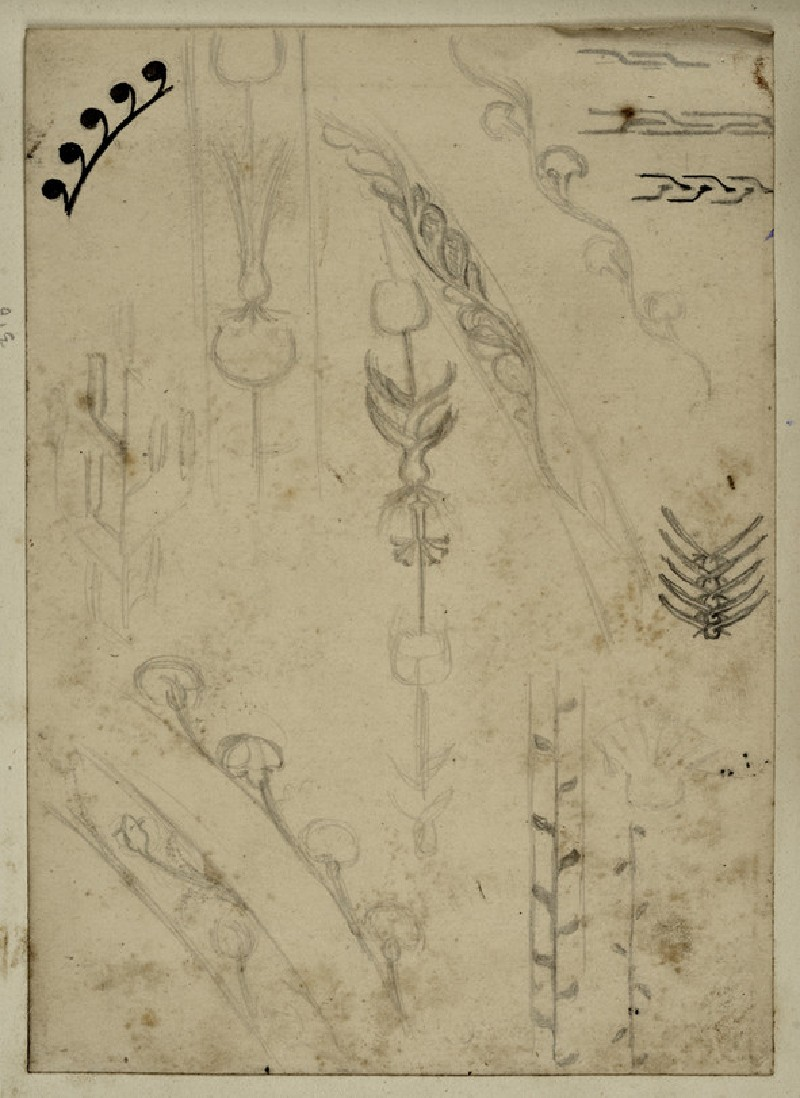 Recto: Study of Plant Forms