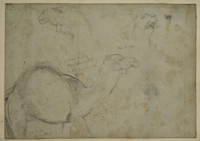 Studies of a Camel