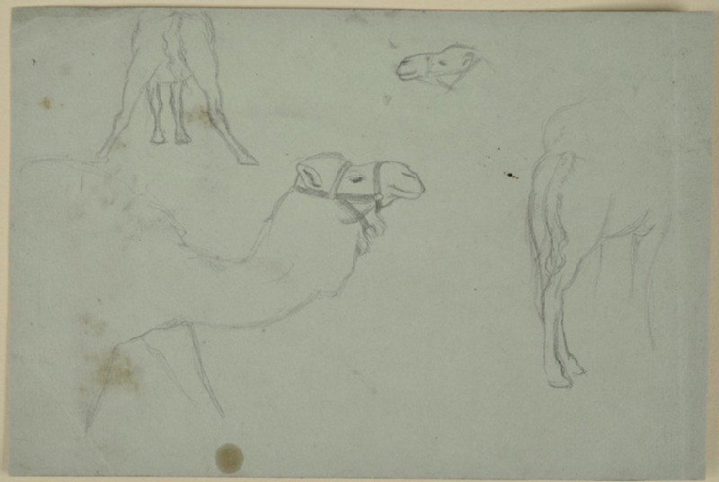 Recto: Four Studies of Camels