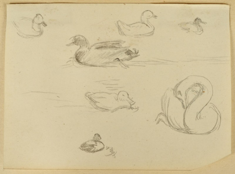 Recto: Study of Ducks and a Swan