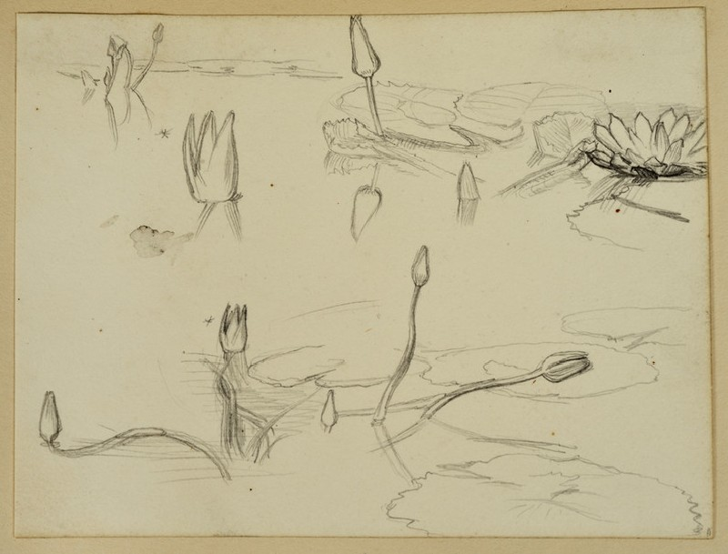 Study of Water Lilies