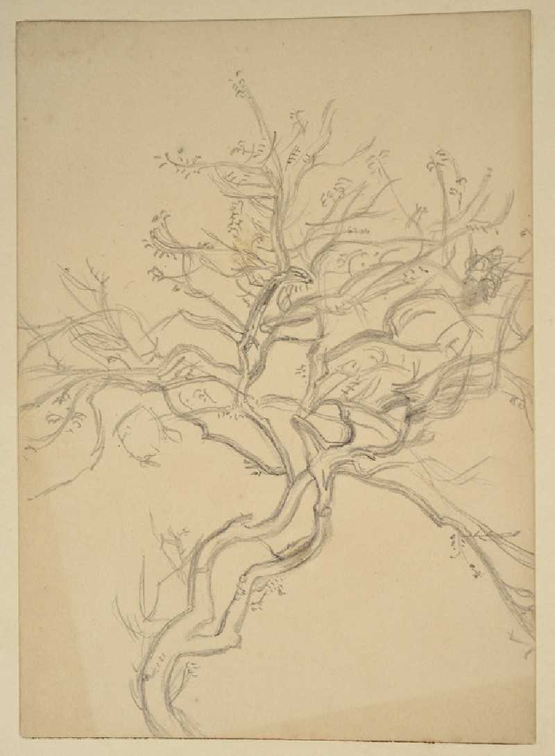 Study of a Tree, related to 'On the Plains of Esdraelon'