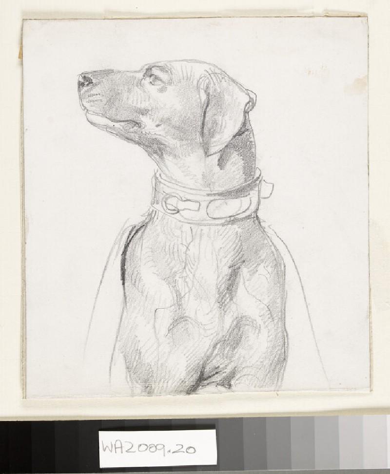 Recto: Study of a Dog<br />Verso: Study of a Boy wearing a Kilt (WA2009.20)