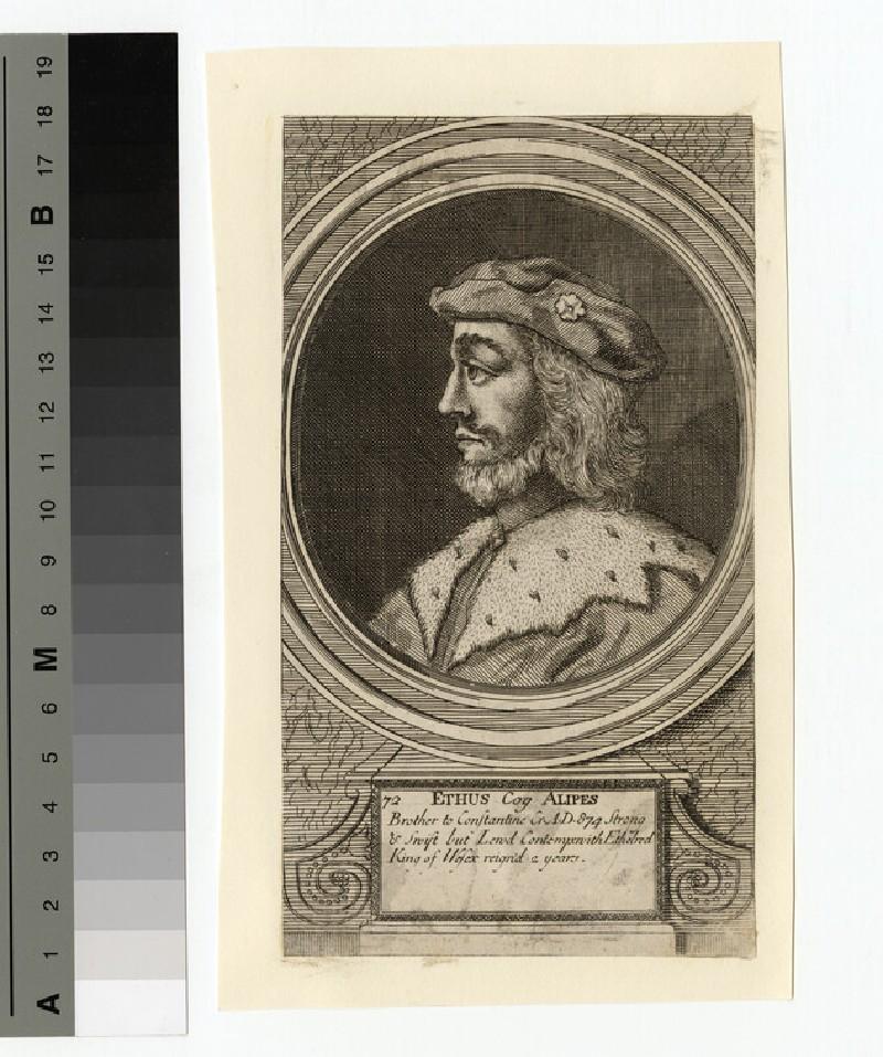 Portrait of Ethus Cog Alipes