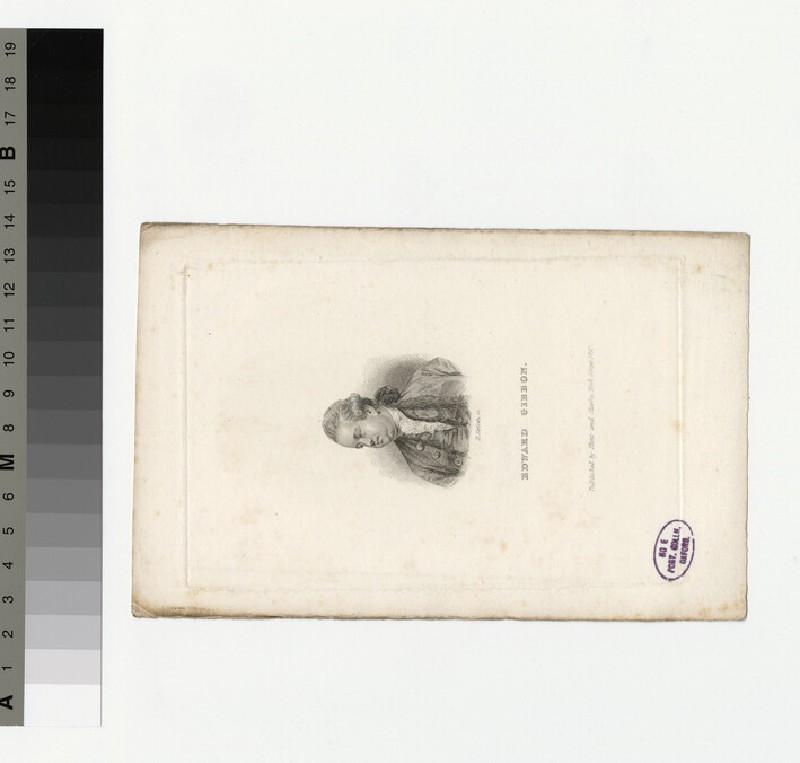 Portrait of Gibbon (WAHP31254)