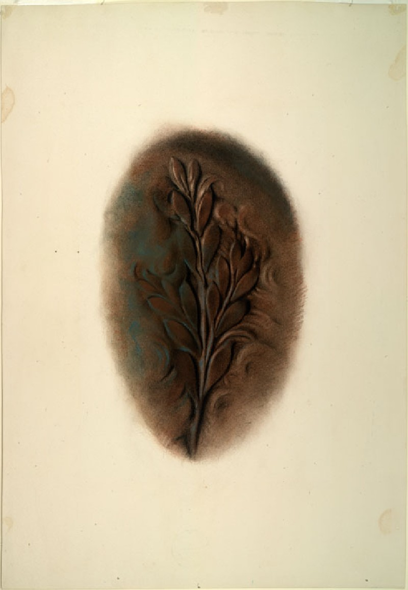 Study of late Greek Treatment of Foliage, from a Coin of Syracuse (WA.RS.ED.038, Burgess, Arthur - Study of late Greek Treatment of Foliage, from a Coin of Syracuse ())