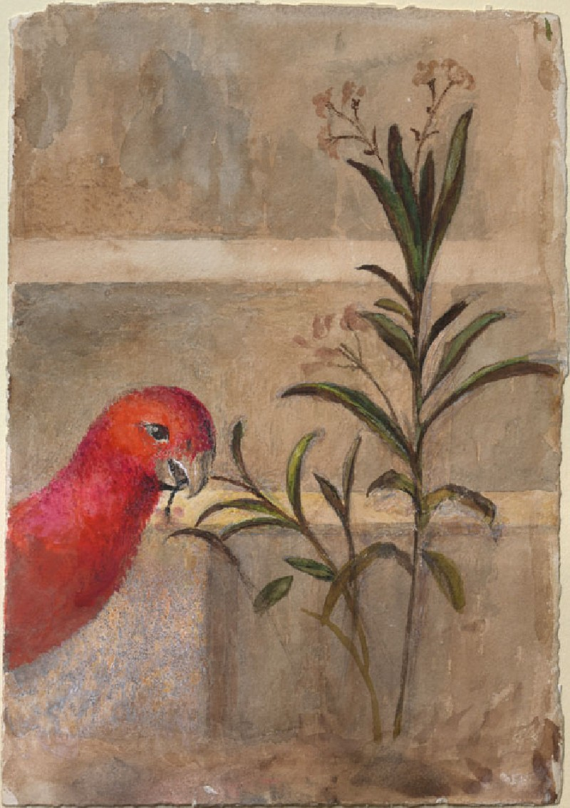 Drawing of a red parrot and plant from Carpaccio's 'Saint George baptises the Selenites' (WA.RS.ED.161, Ruskin, John - Drawing of a red Parrot and Plant from Carpaccio's