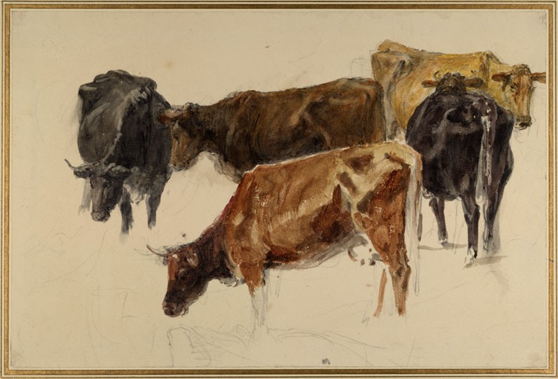 Study of a Group of Cows (WA.RS.ED.185, Turner, Joseph Mallord William - Study of a Group of Cows ())