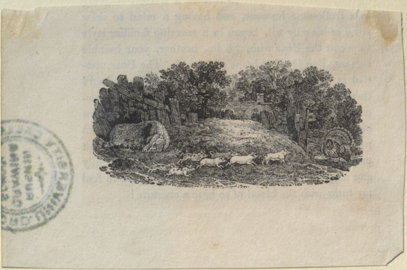 A Sow, Piglets and a Turkey (from 'Fables of Aesop and Others')