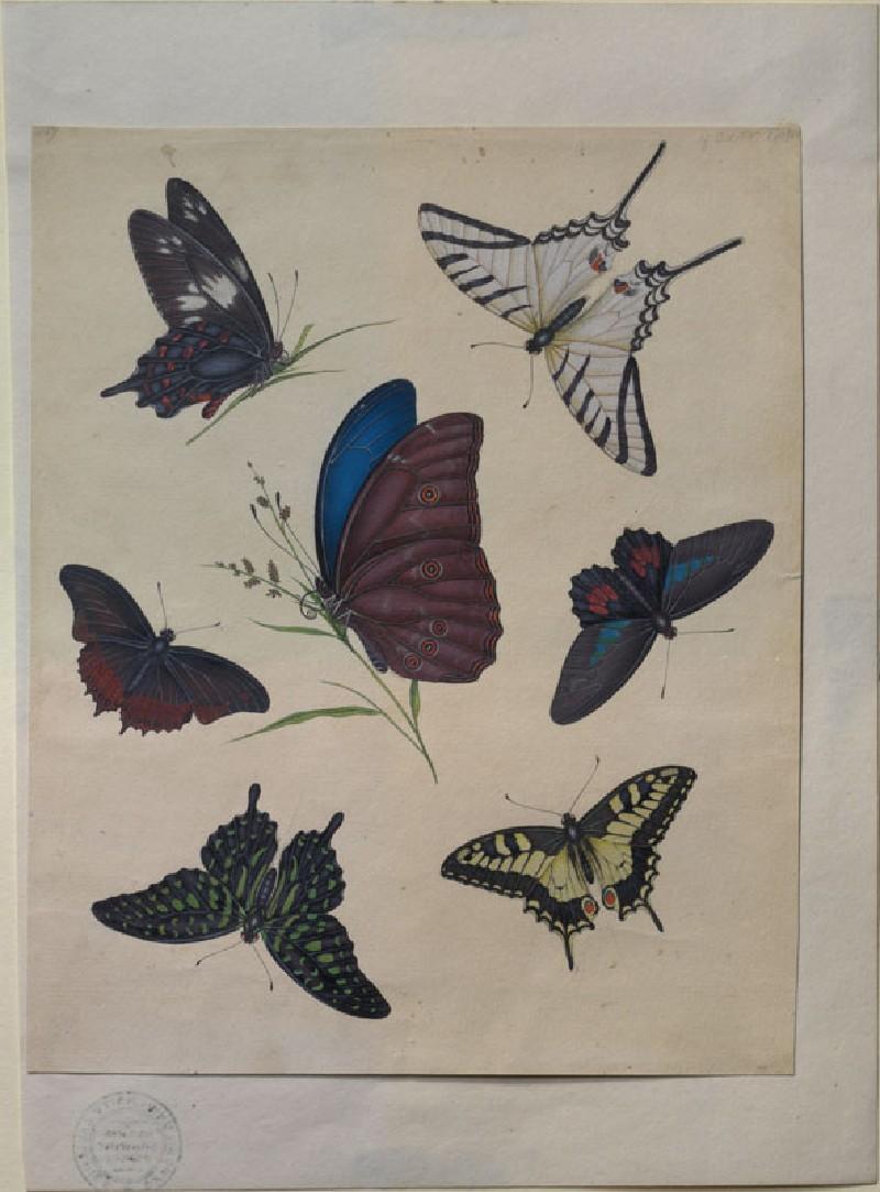 Butterflies (WA.RS.ED.189, Donovan, Edward - Butterflies ())