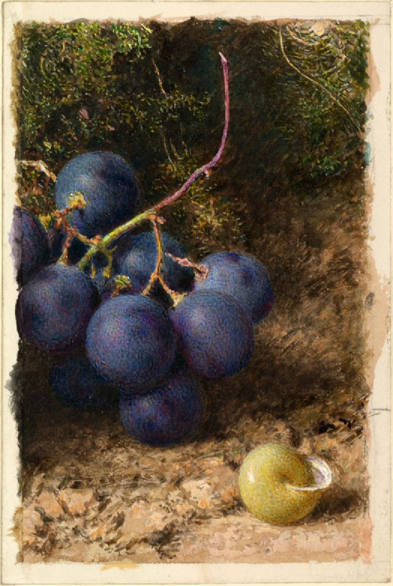 Grapes and a Yellow Snail Shell