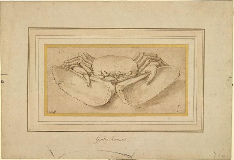 A Crab (WA.RS.ED.200, Giulio Romano (Giulio Pippi), After - A Crab ())