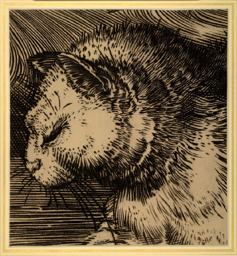Cat's Head: Enlarged Drawing of Dürer's 'Adam and Eve' (WA.RS.ED.230, Burgess, Arthur - Cat's Head: enlarged Drawing of Dürer's