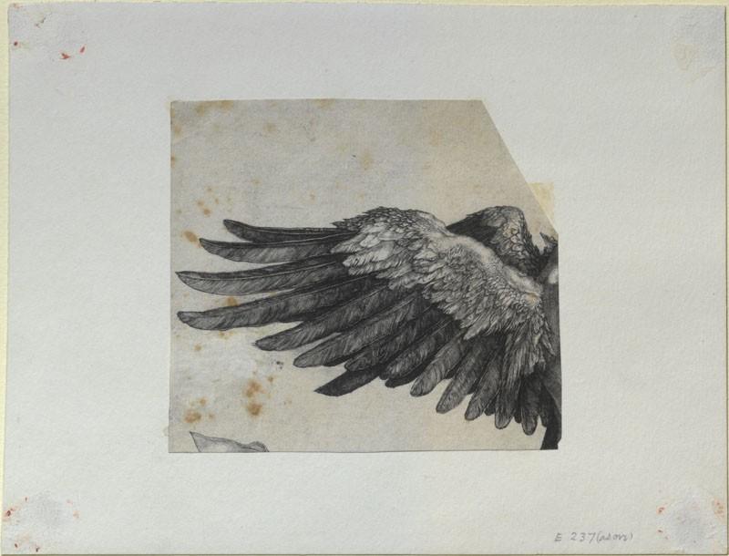 Nemesis' wing
