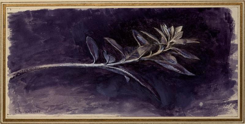 Growing Shoot of Mock Privet (Phillyrea), seen in Profile (WA.RS.ED.267, Ruskin, John - Growing Shoot of Mock Privet (Phillyrea), seen in Profile ())