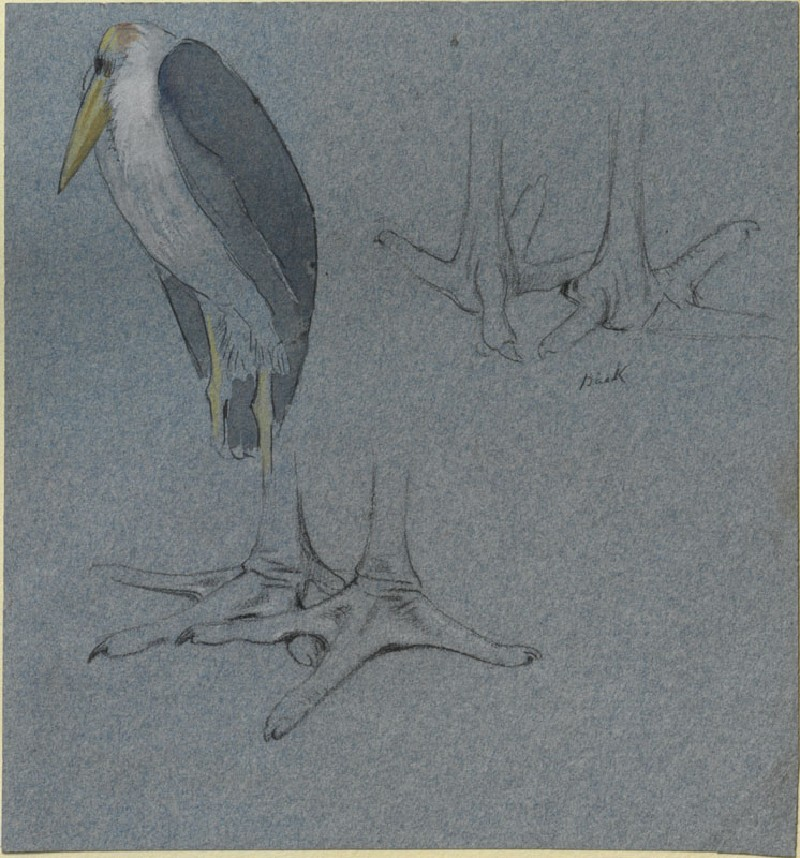 Three Studies of a Marabou Stork (WA.RS.LC.07, Marks, Henry Stacy - Three Studies of a Marabou Stork ())
