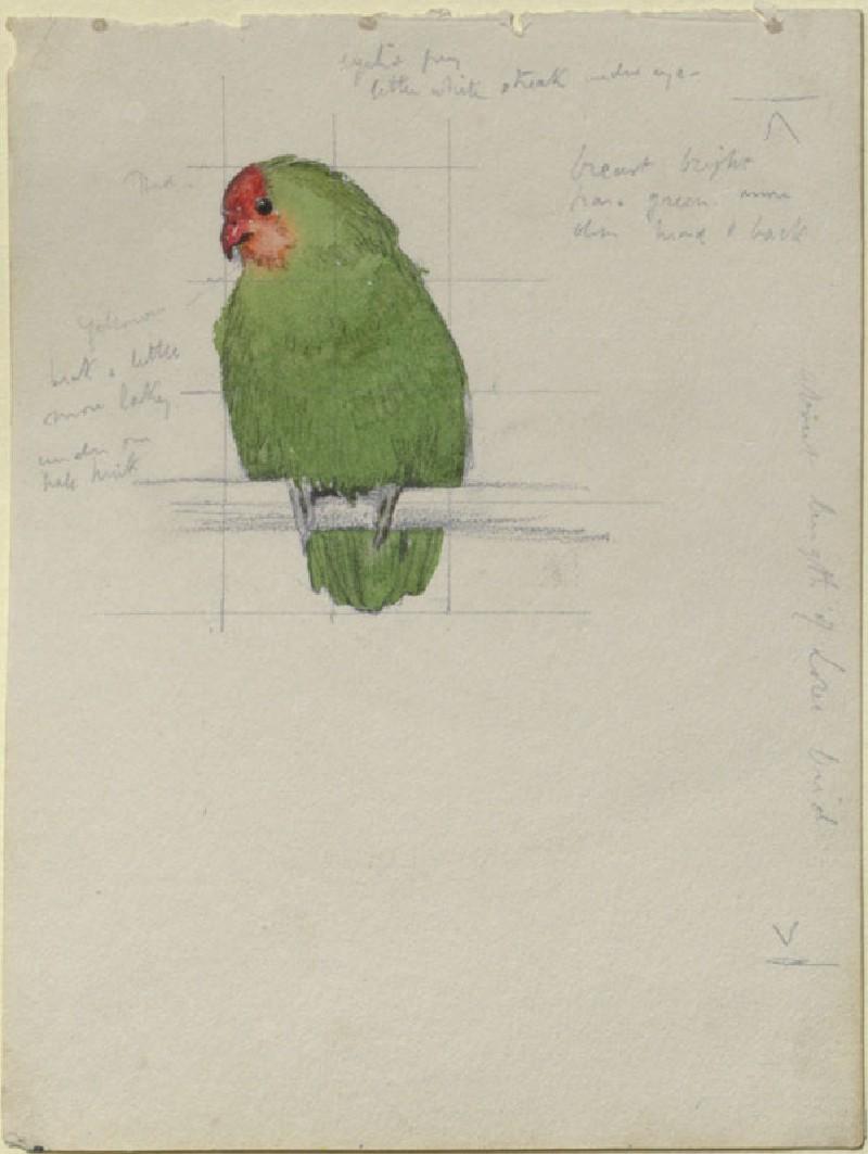 A Study of a Bird