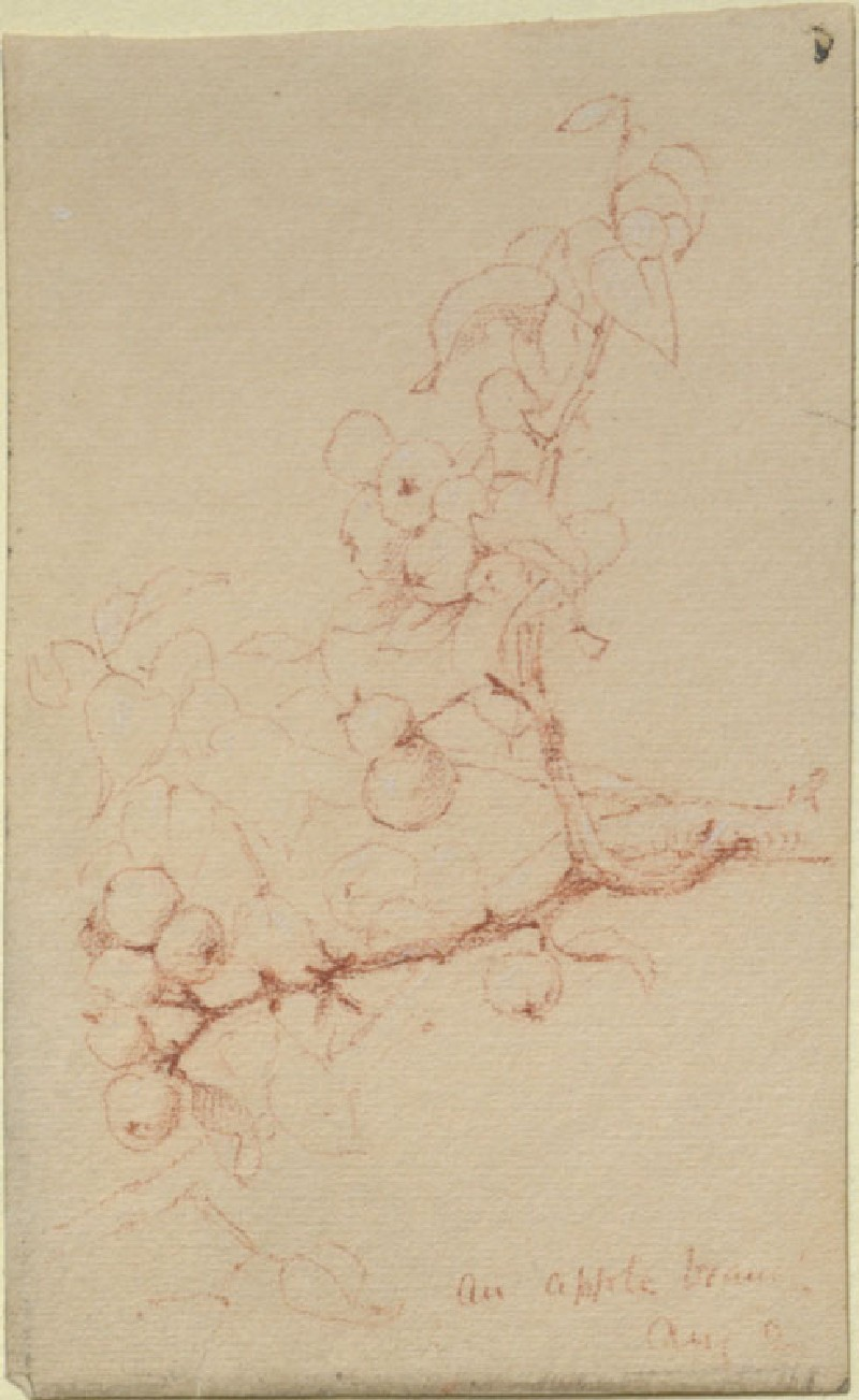 An Apple Branch (Leaf from a Sketch-Book)