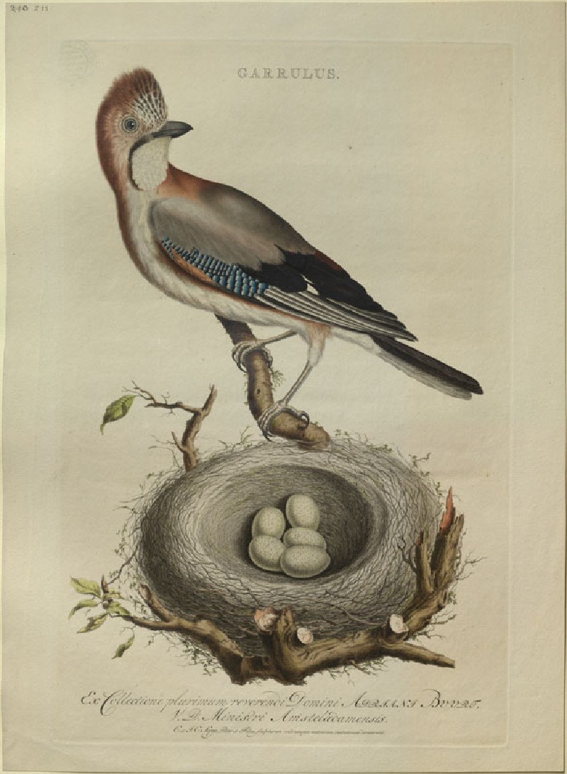 A Jay (WA.RS.RUD5.RUD.181, Sepp, Christiaan, and Jan Christiaen Sepp - A Jay ())