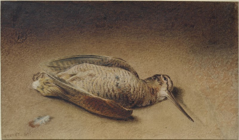 Study of a Woodcock (WA.RS.RUD.179, Hunt, William Henry - Study of a Woodcock ())