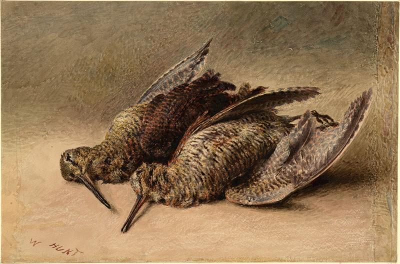Study of two Woodcock (WA.RS.RUD.180, Hunt, William Henry - Study of two Woodcock ())