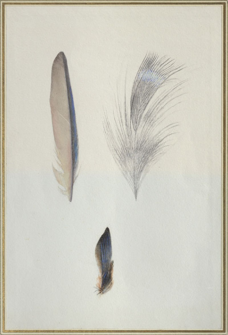 Enlarged Studies of the Feathers of a Kingfisher's Wing and Head, and a Study of a Group of the Wing Feathers, real Size (WA.RS.RUD.204, Ruskin, John - Enlaged Studies of the Feathers of a Kingfisher's Wing and Head, and a Study of a Group of the Wing Feathers, real Size ())