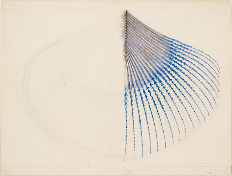 Enlarged Drawing of the Extremity of a Kingfisher's Wing Feather