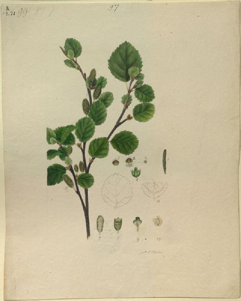Plant Study (WA.RS.RUD.271, Travis, J., Mrs - Plant Study ())