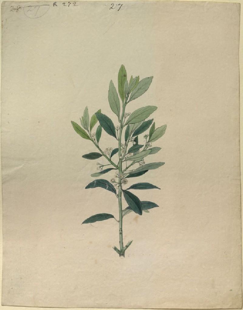 Plant Study