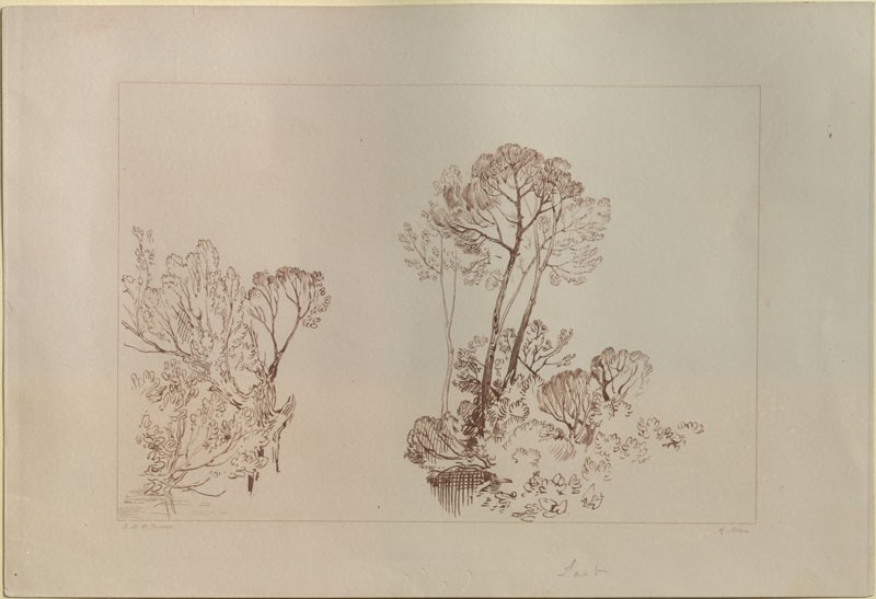 Print of Turner's 'Study of Trees'