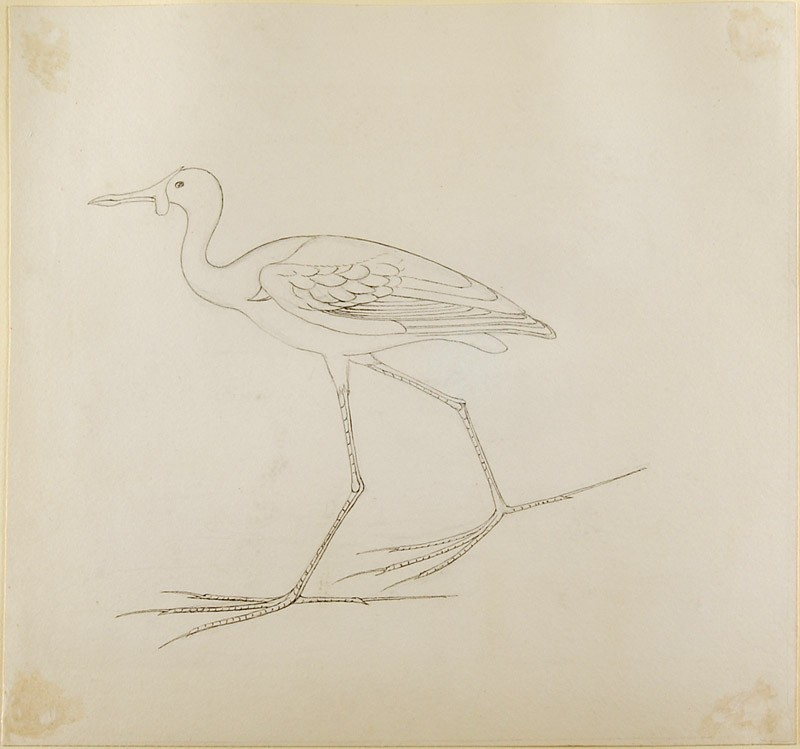Drawing of an Egyptian Painting of a Bird (WA.RS.WS.I.43, Drawing of an Egyptian Painting of a Bird)