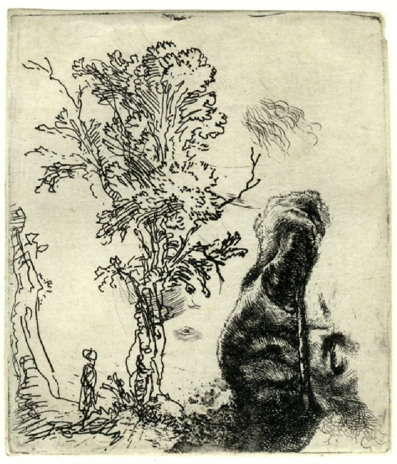 Sheet with two studies: a Tree, and the upper part of a Head of the Artist wearing a velvet Cap (WA1855.406, Sheet with two studies: a tree, and the upper part of a head of the artist wearing a velvet cap, record shot)