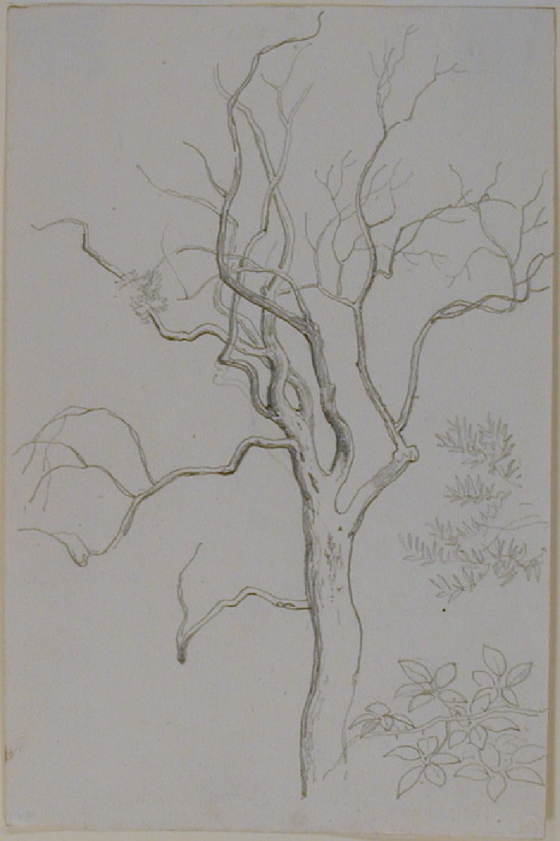 Studies of a bare Tree and two Types of Foliage