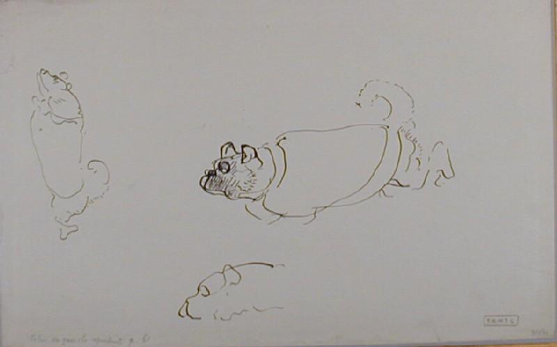 Three studies of a pug