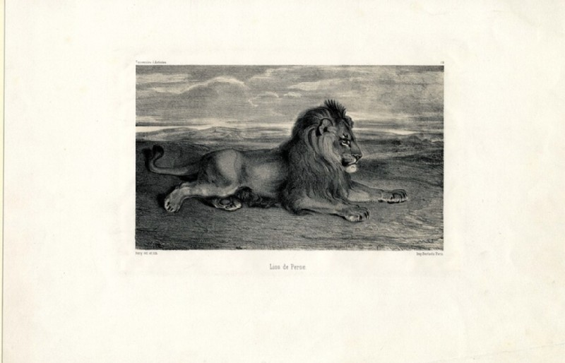 Lion de Perse (WA1963.156, record shot)