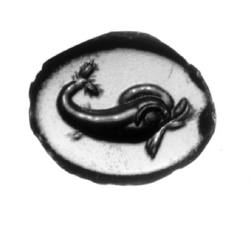 Intaglio gem with dolphin motif (AN1890.276, record shot)