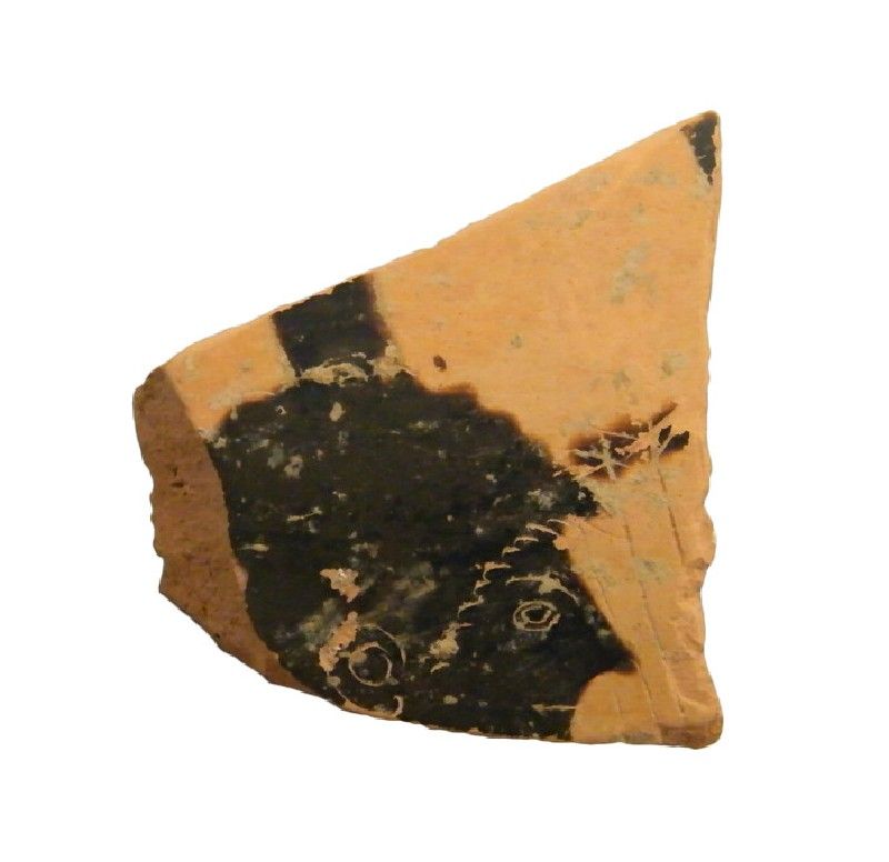 Attic black-figure pottery open vessel sherd (AN1948.40.d, AN.1948.40.d, record shot)