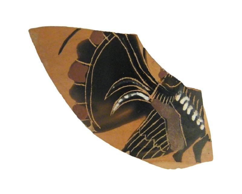 Attic black-figure pottery kyathos sherd (AN1956.297, AN.1956.297, record shot)
