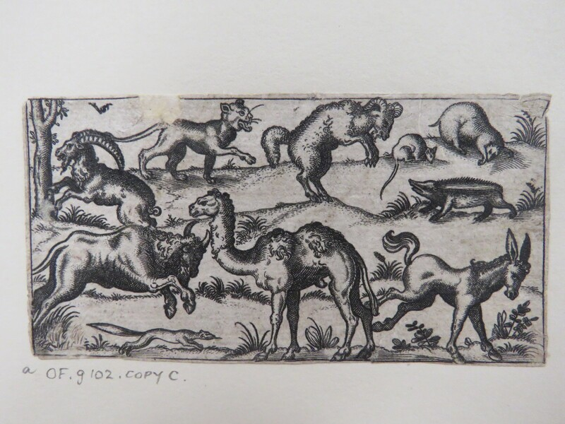 Camel at centre surrounded by nine other animals, including a donkey, rat, badger, ram, mountain goat, and lion surrounded by a limited landscape, from Douce Ornament Prints Album I (WA1915.84.71.1, WA1915.84.71a, record shot)