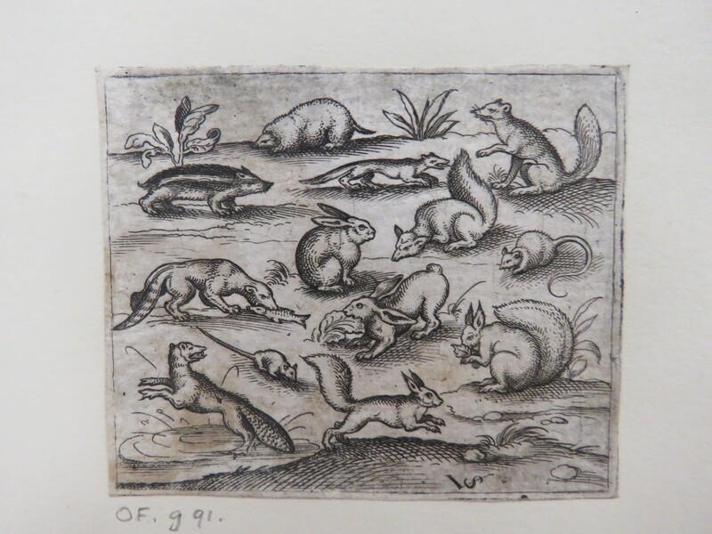 Group of small woodland creatures eating and running around a pond, including a mice, rabbit, squirrel, racoon, woodchuck, ferret, marten, and badger, from Douce Ornament Prints Album I