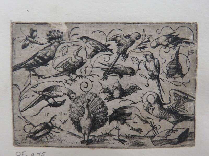 Ten birds on small foliage tendrils with a stork tying a tendril around a pelican's leg, a peacock, and a large beetle in the foreground, from Douce Ornament Prints Album I (WA1915.84.73.4, WA1915.84.73d, record shot)