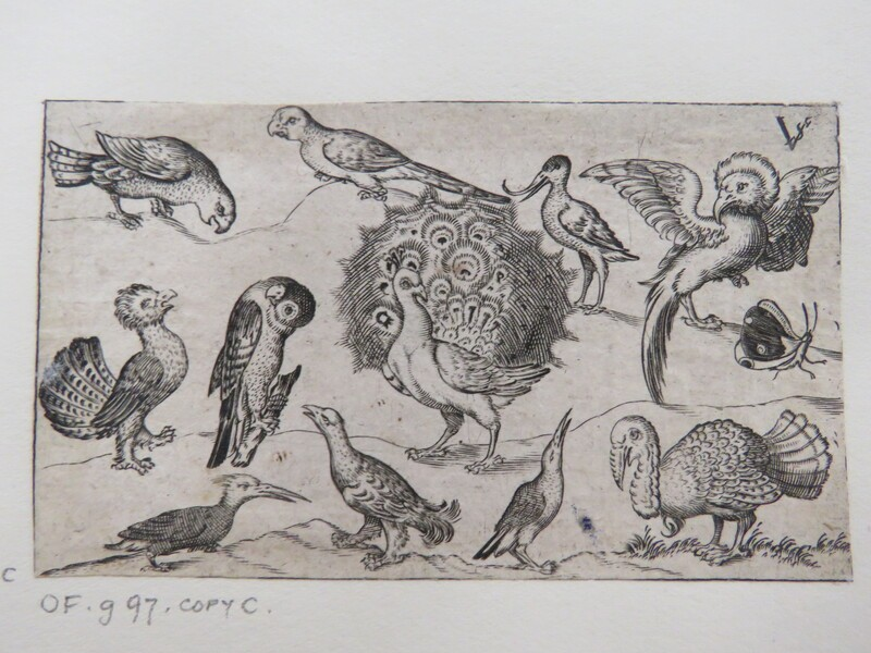 Peacock in centre surrounded by nine other birds, including a turkey, and a butterfly on a minimal ground with a small patch of grass, from Douce Ornament Prints Album I