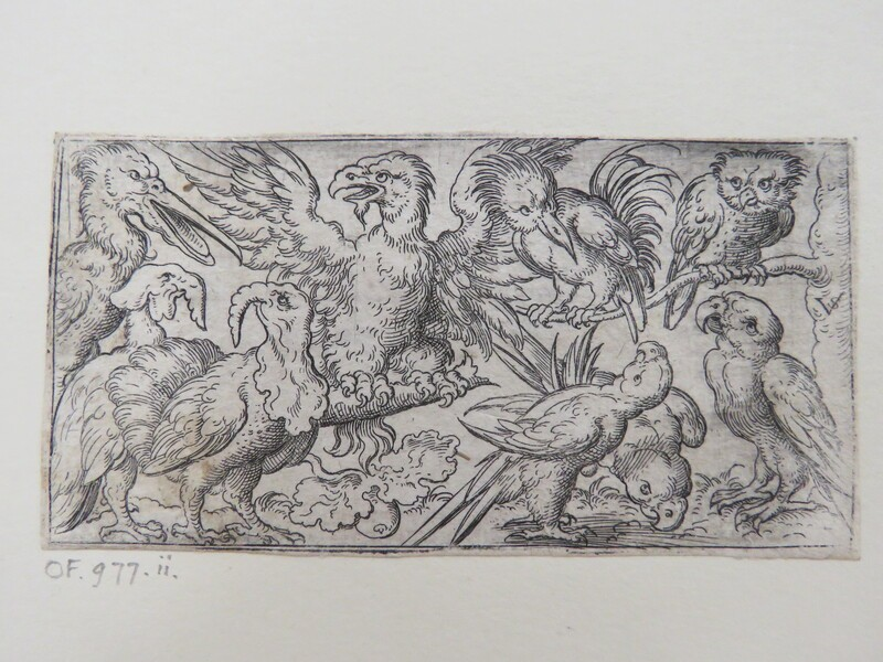 Nine birds including an eagle, an owl, a pelican, three parrots, and two turkeys placed on a minimal ground with tree branch extending from truck on right side, from Douce Ornament Prints Album I