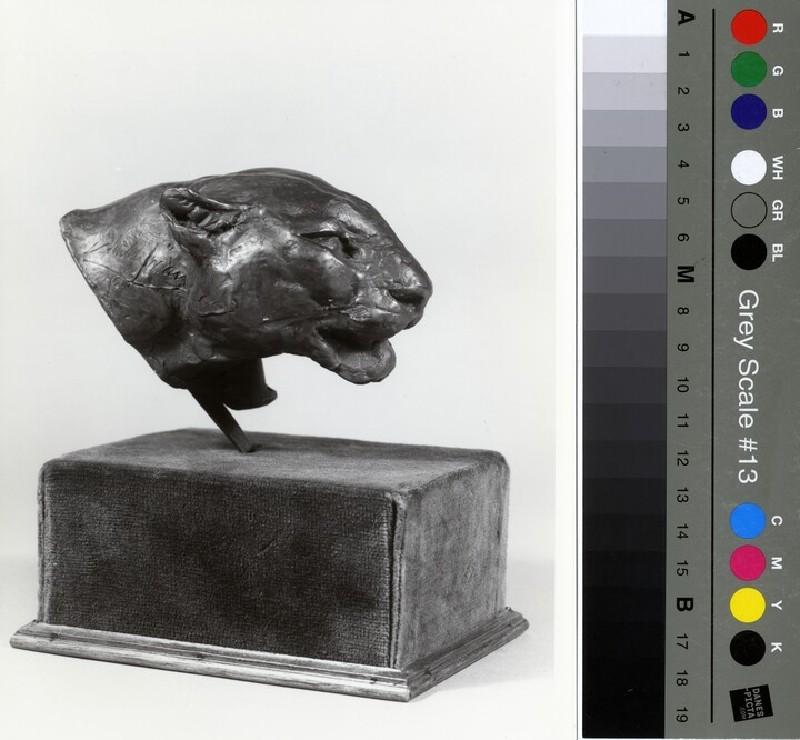 Head of a puma (WA1966.39, record shot)
